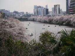 Jour 9, samedi 22 mars 2013 : les Japonais profitent de l'éphémérité des sakura