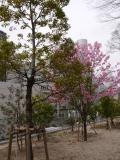 Jour 6, mercredi 20 mars 2013 : Equinoxe de printemps