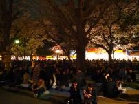 Jour 8, vendredi 22 mars 2013 : les Japonais friands de Hanami