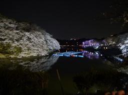 Jour 7, jeudi 21 mars 2013 : Sakura nocturne sur le bord de la Chidorigafuchi