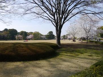 Jour 14, jeudi 28 mars 2013 : cerisiers autour du Kōkyo, le Palais Impérial