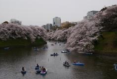 Jour 12, mardi 26 mars 2013 : barques, amoureux et cerisiers sur la Chidorigafuchi