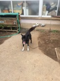 Socks, the (adorable) dog of the farm
