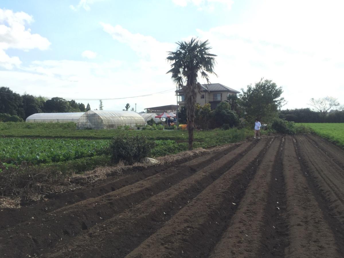 Saito-san farm in Chiba