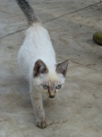 Cute kitty in the farm