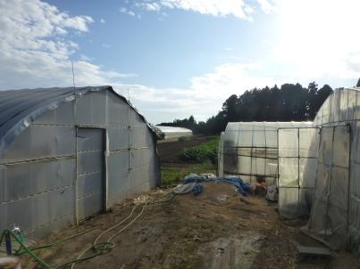 Inside the farm